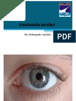 Aula 1 Anatomia Ocular