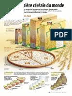 Infographie Carrefour - Le riz, première céréale du monde - Février 2001