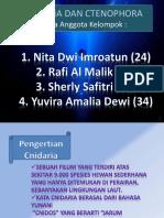 Cnidaria Dan Ctenophora