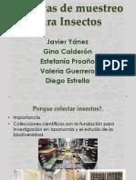 Expo Tecnicas Insectos