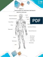 Anexo 1. Taller de Reconocimiento de Sistemas Corporales (2)