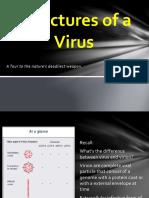virus structure.pptx