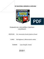 Informe Final II Biloxi