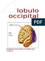 Lobulo occipital.pdf