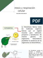 Fotosintesis practica