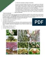 La Flora y Fauna de Guatemala en Peligro de Extinción