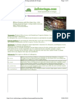 Rhinoclemmys pulcherrima