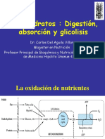 Digestion Absorcion Glicolisis Copia