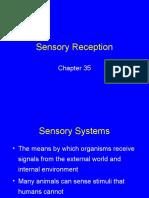 35 Sensory perception.ppt