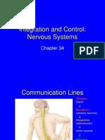 34 Nervous System.ppt