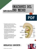 malformaciones del intestino medio