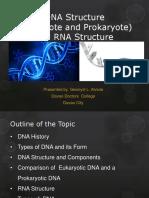 DNA Structure Alviola