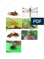 7 tipos de insectos.docx