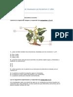 GUÍA DE TRABAJO LAS PLANTAS 3.docx