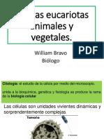 Celulas Eucariotas Lab 2019 PDF.
