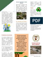 110801621 Triptico Conservacion Del Medio Ambiente