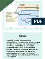 Procariota y Eucariota