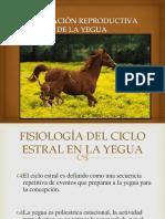 Evaluación Reproductiva de La Yegua