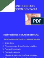 08. RadiologÃ_a de la Evolución Dentaria