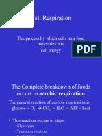 CELL RESPIRATION 3L 2Q.ppt