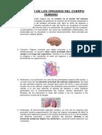 Trabajo de Los Organos Del Cuerpo Humano