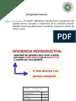 Conferencia 3 Condición Corporal e Indicadores Reproductivos
