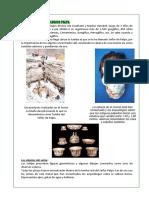El Proyecto Arqueologico Palpa