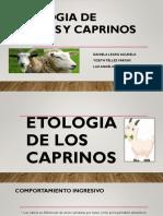 Etologia de Ovinos y Caprinos