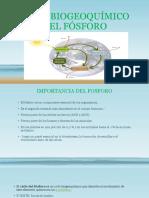 Expo Ciclo Biogeoquímico Del Fosforo Pptttt