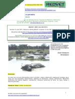 BUFALOS.pdf