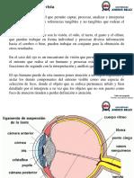 TF Percepcion y Vista