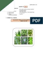 SESIÓN 29 PS Dialogamos Sobre Las Plantas Medicinales de Cada Región Del Perú.