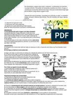 LA FOTOSINTES y respiratorio.docx