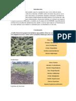 Introducción y cuestionario.docx