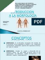 Clase de Morfologia