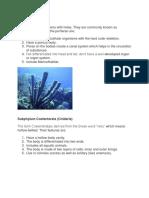 Subphylum Porifera