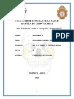 Monografia Rgeiones de La Craneo y Cara