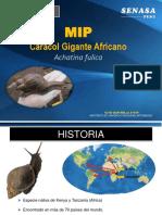Achatina fulica.pdf