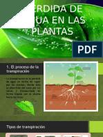 Fisiología vegetal, pérdida de agua en plantas.pptx