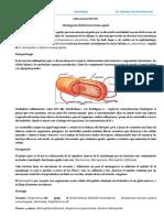 Neurologia UATF 3er Parcial