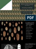 Polyplacophora - Ramírez Delgadillo