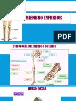 MIEMBRO INFERIOR.pptx