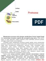 2 REKAP Metabolisme Protozoa Bakteri Fungi