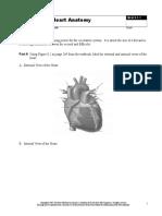 8.1.1 Heart Anatomy.ast