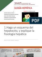 expo de hepatico