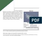 Diatomee.pdf