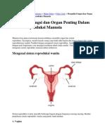 Anatomi Dan Fisiologi Organ Wanita Dan Pria