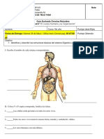 guia evaluada 5to Sistema Digestivo.docx