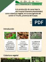 Evaluacion de La Produccion de Cacao Bajo La Influencia Del Kudzu Tropical Allan Alvarado