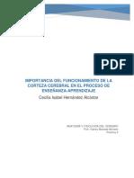 IMPORTANCIA DEL FUNCIONAMIENTO DE LA CORTEZA CEREBRAL EN EL PROCESO DE ENSEÑANZA-APRENDIZAJE.docx